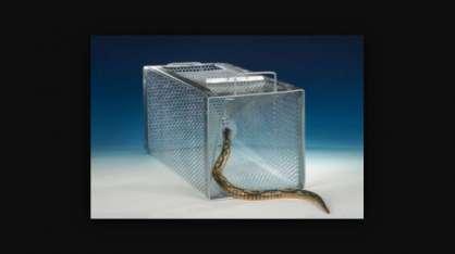 Yılan Yakalama Kafesi